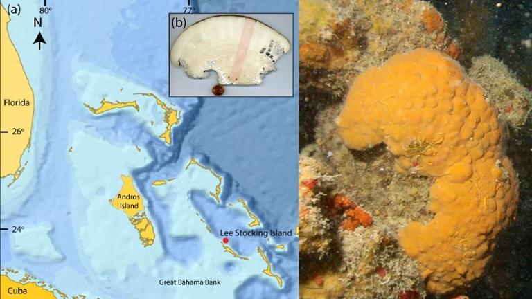 اسناد قدیمی آبوهوای صدها سال پیش به کمک یک اسفنج دریایی ۶۰۰ ساله بازسازی شده است